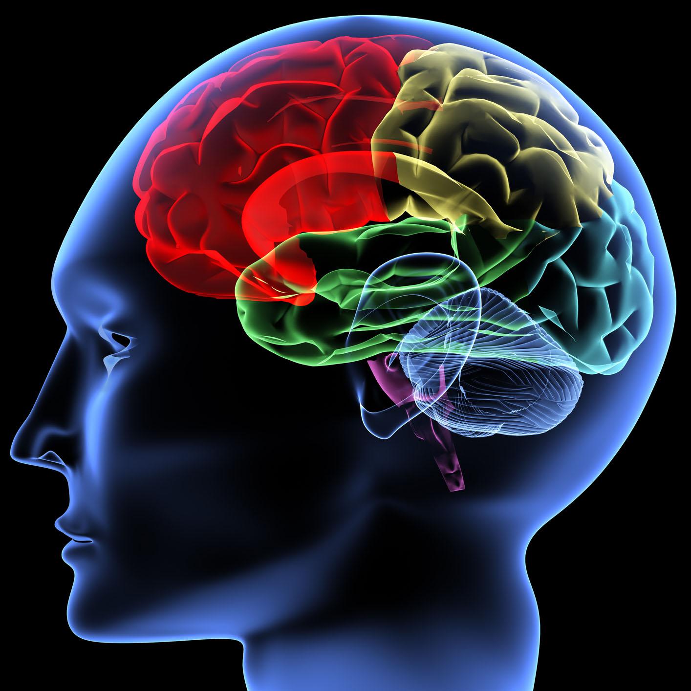 brain_Ankota_Home_Care_Blog.jpg