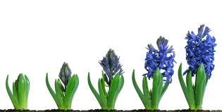 Ankota_Home_Care_blog_-_growth